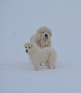 winter 2013 016